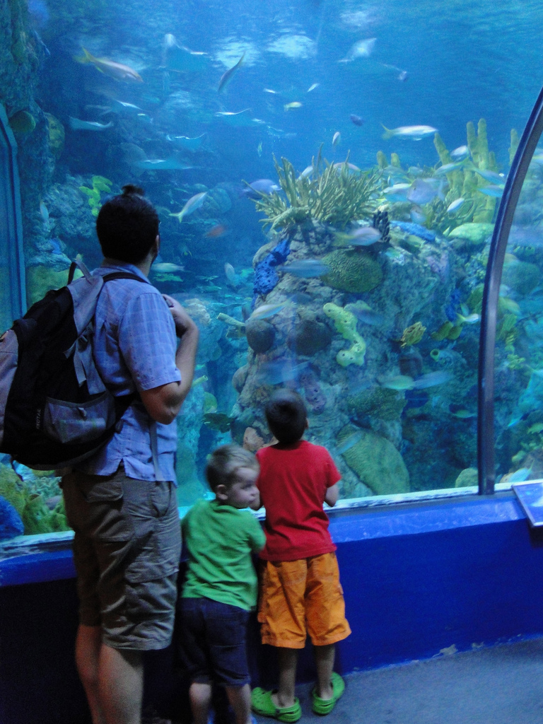 new orleans aquarium, family friendly