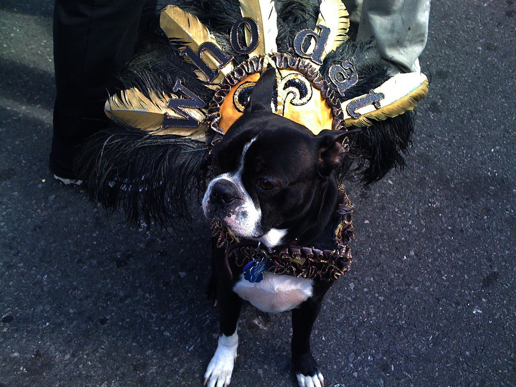 new orleans saints, who dat nation