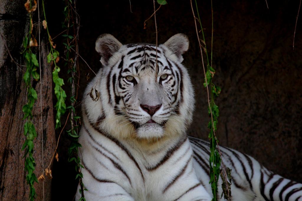 new olreans zoo, audubon zoo