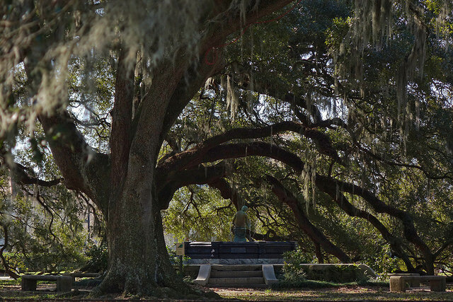An ancient oak tree in City Park. (Photo: Paul Broussard)
